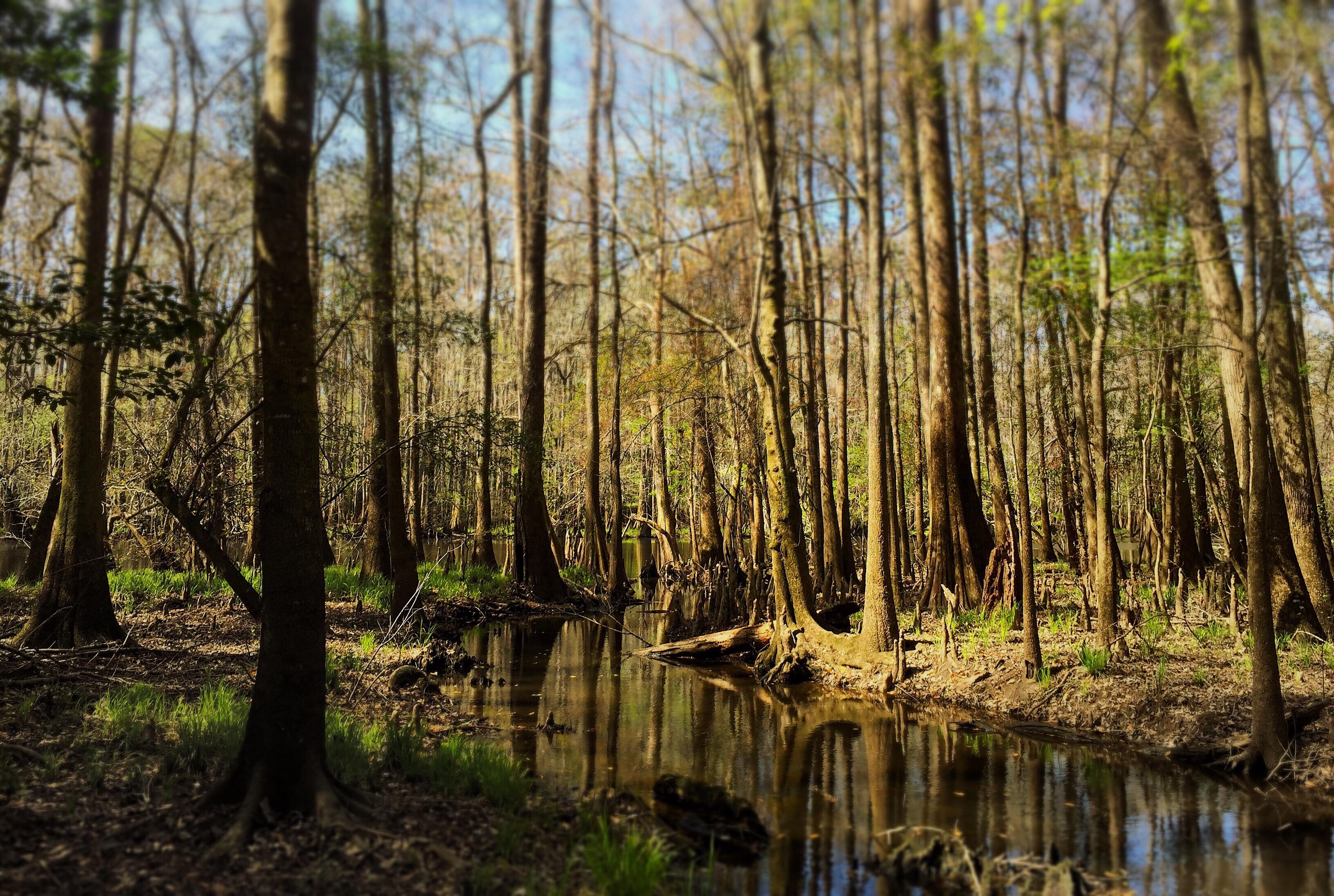 Afternoon Swamp, SC