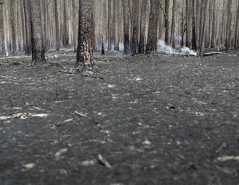 A Necessary Burn, SC